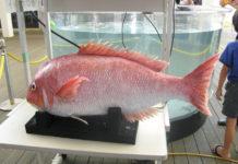 В университете MIT создали робота-рыбу